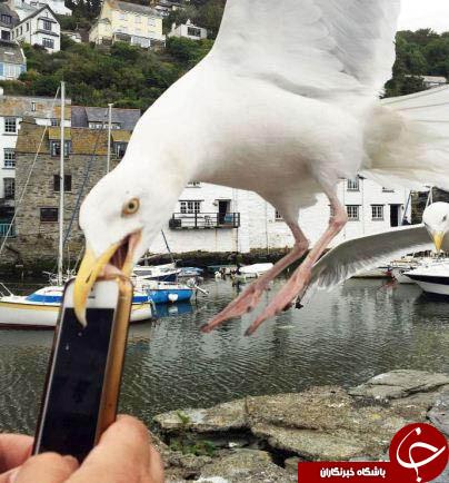 شهری با دزدهای پرنده+تصاویر