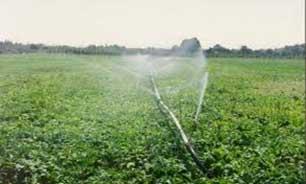 3168178 389 تولید انواع محصولات کشاورزی و دامی در موسسه کشاورزی آستان قدس رضوی