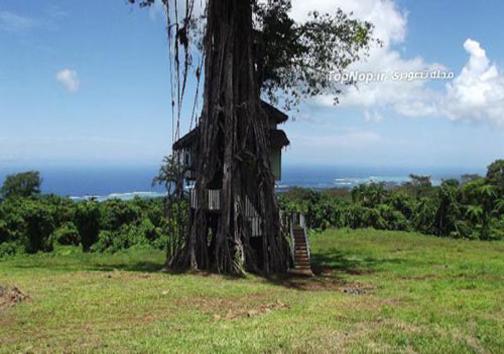 یک اقامتگاه تفریحی بر روی درخت! +عکس
