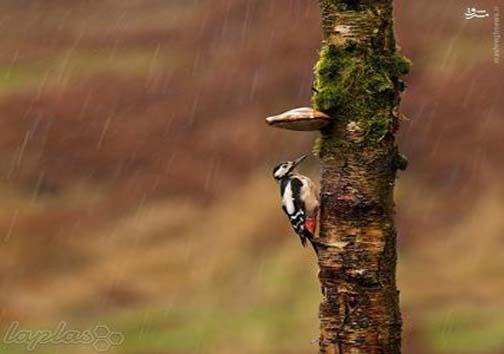 حیوانات در باران کجا می روند+ عکس