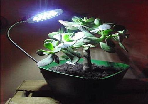 شارژ تلفن همراه با خاک گیاهان!