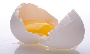 3244525 587 توزیع تخم مرغ در سبد کالای اقشار کم درآمد