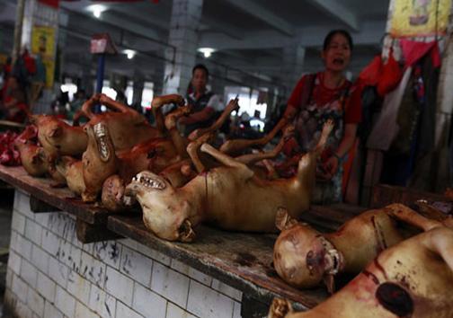 جشنواره خوردن گوشت سگ 18+