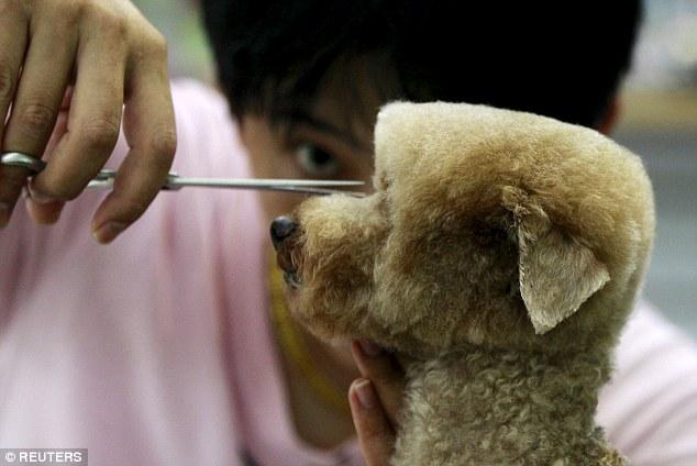 سرایت مد و فشن به دنیای سگ ها+در حال کار