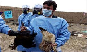 مشاهده ویروس آنفلوانزای مرغی در مازندران