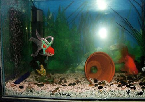 ماهی سوار بر ویلچر ! +عکس