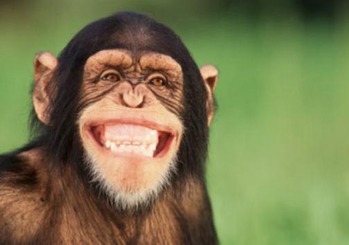 شامپانزه هم به نشانه مثبت لبخند می زنند