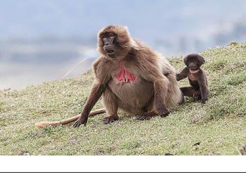 عجیبترین مادران در دنیای حیوانات + تصاویر