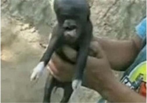 آیا زن داعشی بچه خوک بدنیا آورد +عکس