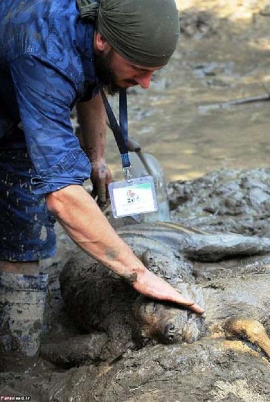 تصاویر دردناک از حیوانات دفن شده زیر سیل تفلیس