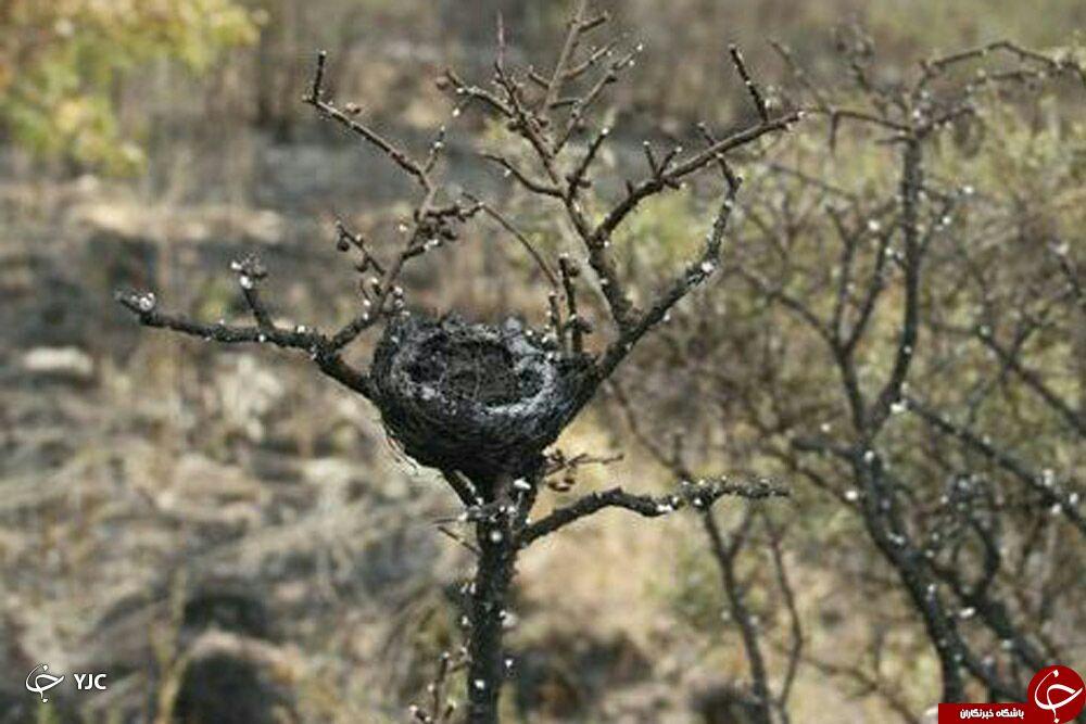 تصاویر از بین رفتن حیوانات در آتش سوزی آبیدر