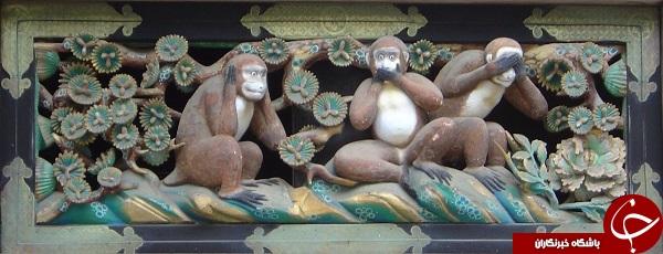 ماجرای میمون های تلگرامی!