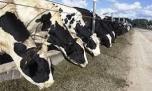 پیشوا در صنعت دامپروری، تولید شیر خام رتبه تک رقمی کشوری دارد