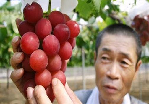 انگور ۲۷ میلیون تومانی (+عکس)