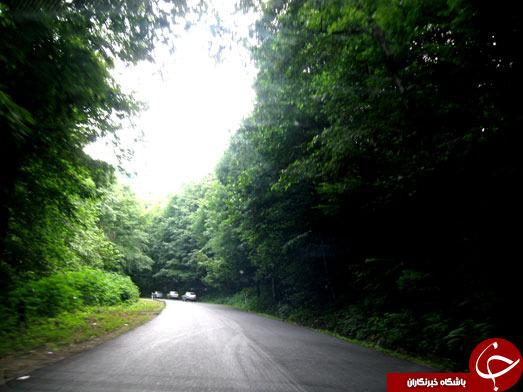 جادهای شبیه به بهشت + تصاویر
