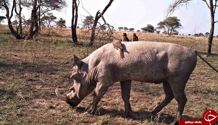 15سلفی جالب حیوانات + تصاویر