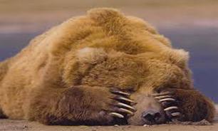 فرار خرسها تکذیب شد