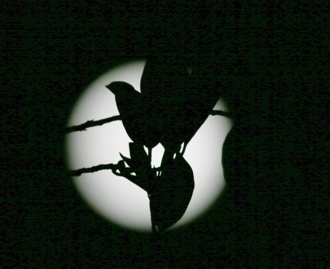 ماه به زمین آمد / در حال کار