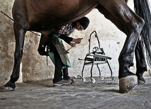 فرناز هاشمی، تنها دختر نعلبند ایران! +تصاویر