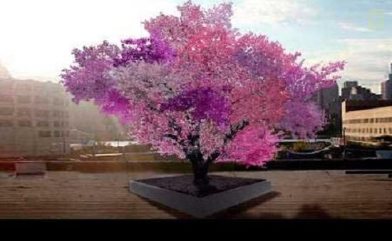 درخت 40 میوه به شکوفه نشست! +عکس
