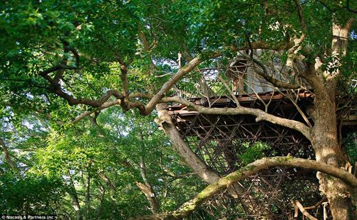 گرانقیمت ترین خانه درختی در جهان+تصاویر