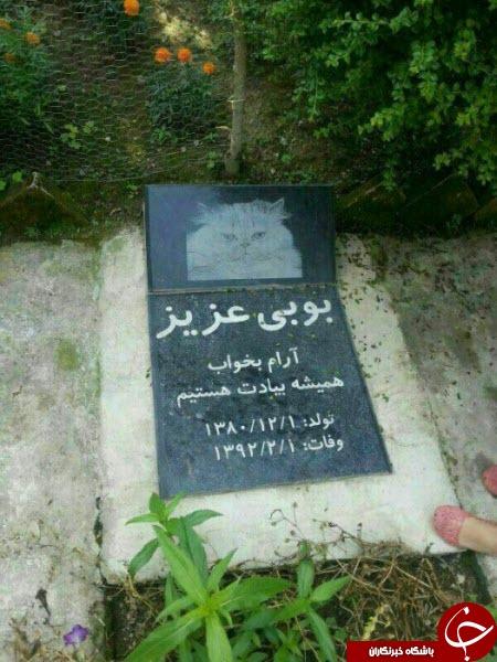 زندگی هاپوها و پیشی های پولدار تهران!