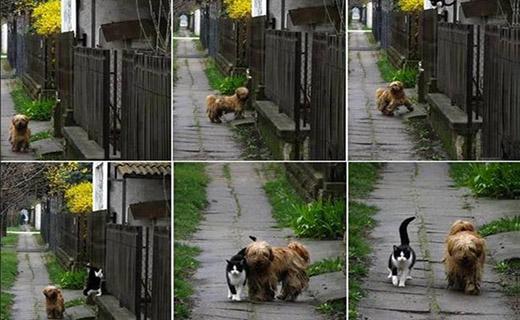 سگ و گربه ای که هر روز در یک ساعت معین با هم قدم می زنند! + تصویر