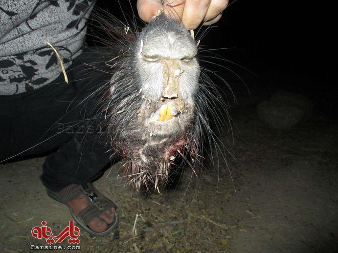 کشتن جانور ناشناخته در اطراف مسجد سلیمان+عکس