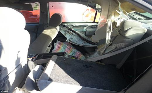 سقوط خرس بر روی خودروی سواری+ تصاویر