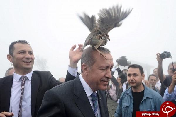 پرنده ای که روی سر اردوغان نشست +عکس