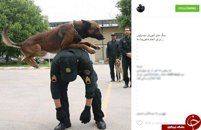 اشرار دستگیر شده توسط نیروهای ویژه نوپو +تصاویر (+18)