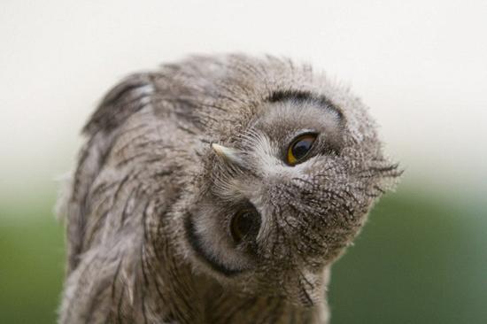 تصاویر بی نظیر پرنده شکاری!