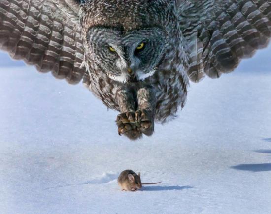 تصاویر بی نظیر یک پرنده شکاری!+تصاویر