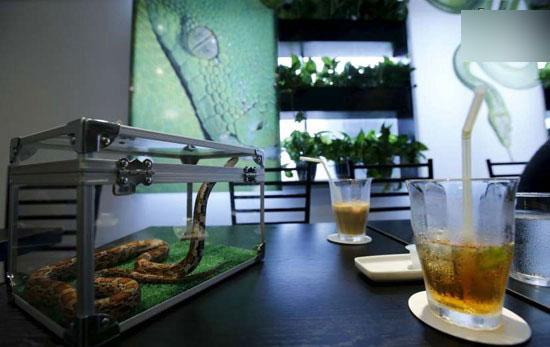 میل کردن قهوه در کافی شاپ مار + عکس