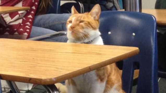 گربه ای که به مدرسه می رفت +عکس