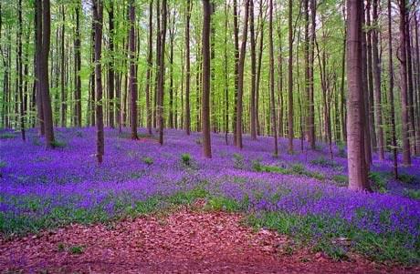 تصاویری بکر از جنگلی با رنگ آبی