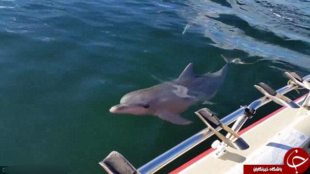 اشتباه دلفین در شکار+تصاویر