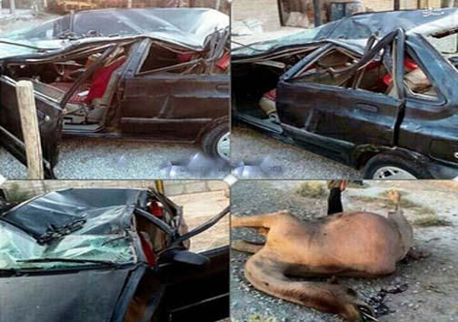 عاقبت پراید بعد از تصادف با شتر+ عکس