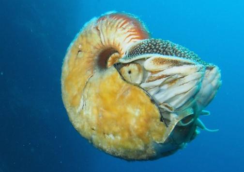 ظهور دوباره نایاب ترین موجود دریایی پس از 30 سال