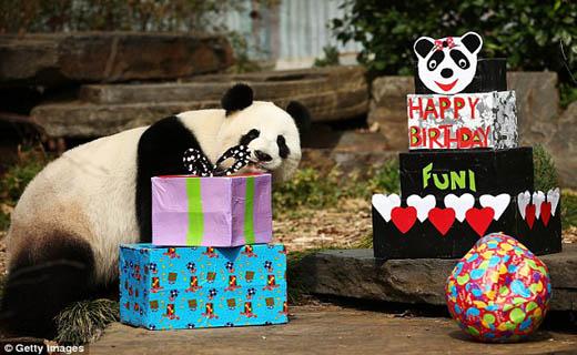 جشن تولدی متفاوت در دنیای حیوانات+تصاویر