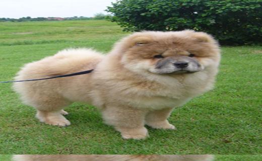 سگ خطرناک جهان