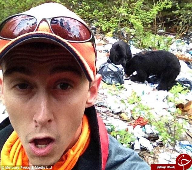 سلفی گرفتن با خرس ها ممنوع شد+تصاویر