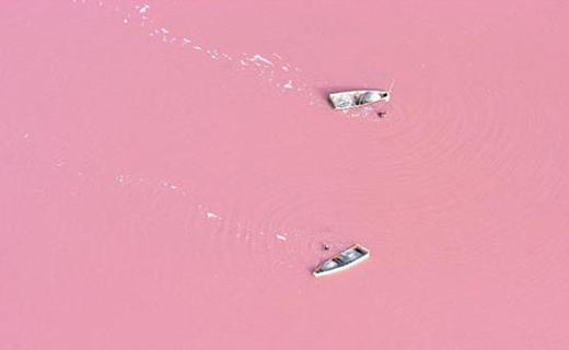 شنا در مخلوطی از شیر وتوت فرنگی را اینجا ببینید+تصاویر