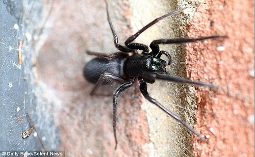 بزرگترین عنکبوت کشف شده در جهان+تصاویر