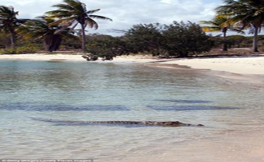 استرالیا مرگبارترین سواحل دنیا شناخته شد+ تصاویر