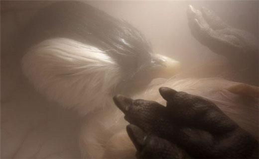 تصاویری زیبا از جنین حیوانات+ تصاویر