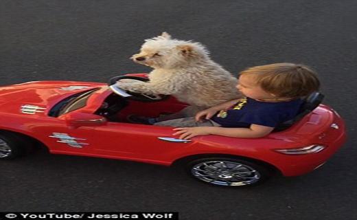 راننده شخصی پسر بچه چهار ساله+ تصاویر