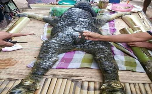 کشف موجودی عجیب در آب های تایلند+ تصاویر