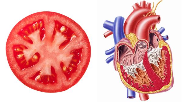 شباهت شگفت انگیز میوه ها به اعضای بدن