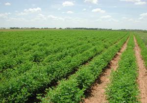 حق بیمه محصولات کشاورزی از حرف تاعمل